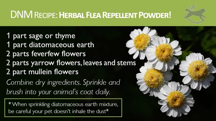 Herbal-Flea-Repellent-Powder