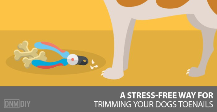 trimming your dogs toe nails