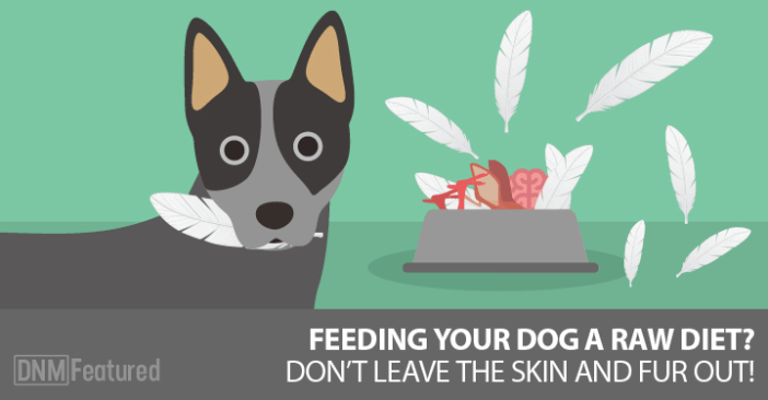 what to give your dog for healthy skin and coat