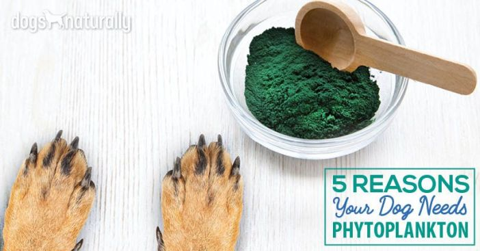 phytoplankton for dogs