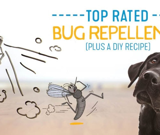 Bug Repellents For Dogs
