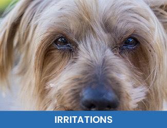irritations dog eyes