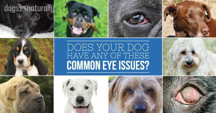 Collage of dogs and different eye conditions.