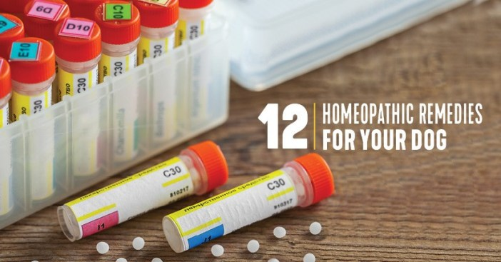 12 Homeopathic Remedies for dogs
