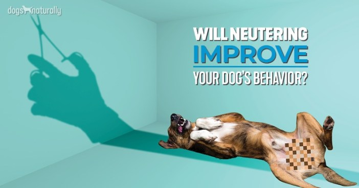 will neutering improve behavior