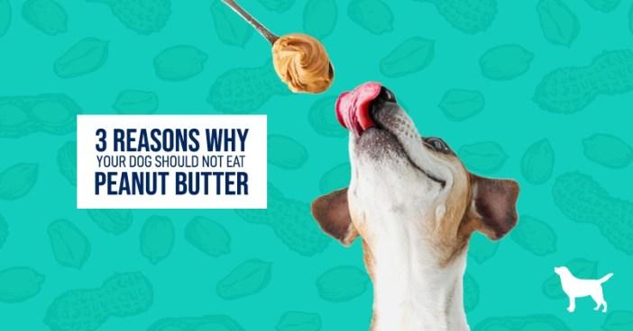 Dog licking peanut butter