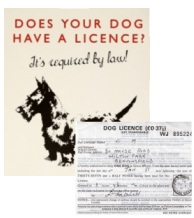 dog licence