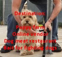 stolen-dog