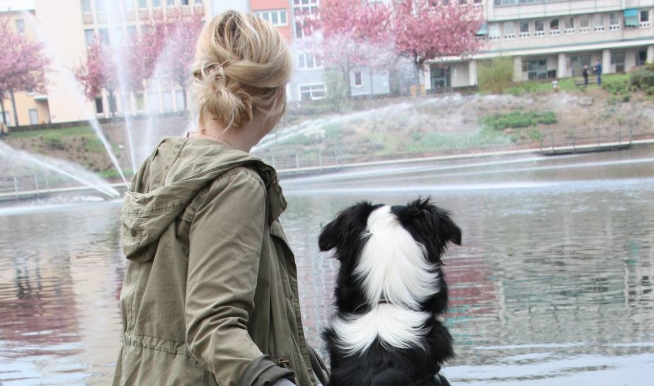 Hunde und ihre Auswirkung auf den Menschen