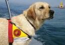 Addio e ringraziamenti a Blu, il Labrador dei Vigili del Fuoco.