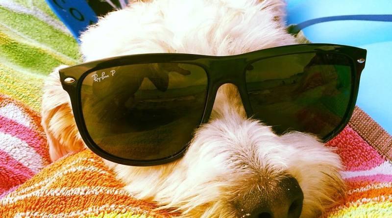 Lolo, il cane che ti porta in vacanza!