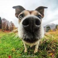 Doti Caratteriali: come definire il carattere del nostro cane