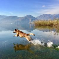Il cane e l'acqua: il primo approccio è fondamentale!
