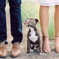 Ingaggio del cane: nello sport e nella vita di tutti i giorni