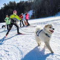 Sciare con il cane? Si può! Si chiama Skijoring!