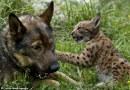 Haidèe, il cane che odiava i gatti e ha dovuto salvarne uno.