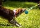 Pawee: giochi per cani ispirati dagli sport cinofili