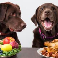 Il cane è onnivoro o carnivoro? Ci interessa?