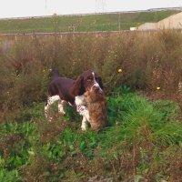 Il riporto: l'estrema generosità del cane da caccia