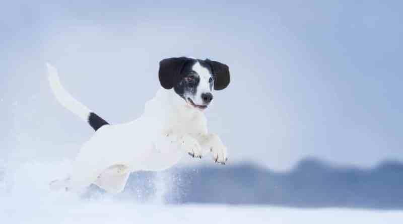 Che cosa posso regalare al mio cane a Natale?
