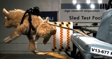 Video: usa il kennel in auto e salva la vita al tuo cane.