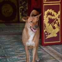 Dal Vietnam allo Sri Lanka, i miei quattro passi in mezzo ai Cani pariah