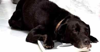 Per amore sovralimentiamo i nostri cani e li uccidiamo: lo studio inglese.