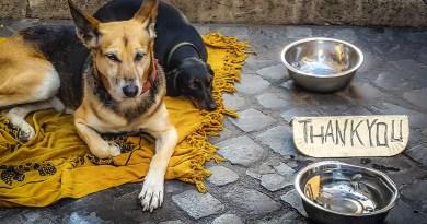 Roma: accolti anche i cani nelle strutture per i senza tetto.