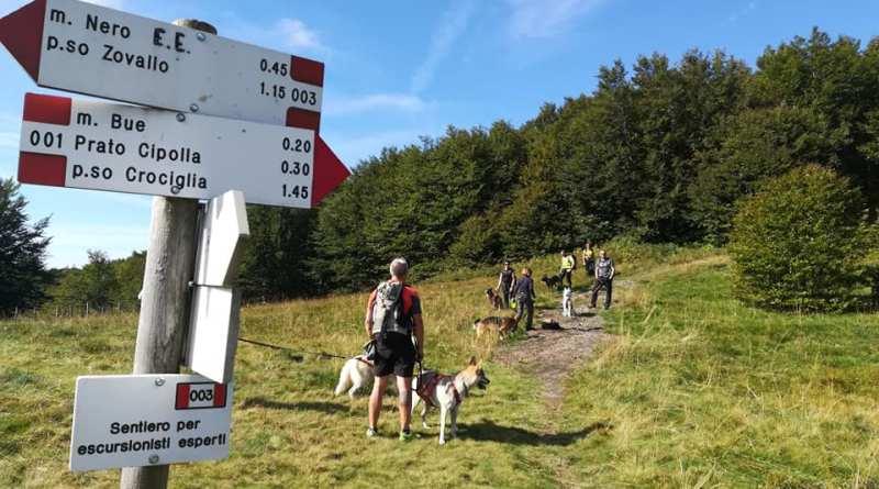 A Piacenza è più facile fare sport con il cane, c'è Sporty Dogs gang!