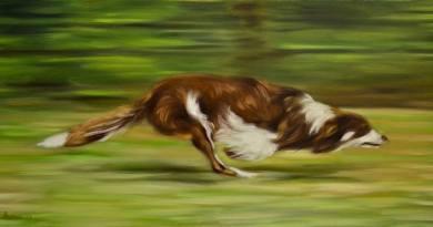 Stage con Chiara Chiaffredo: il gesto atletico della corsa del cane
