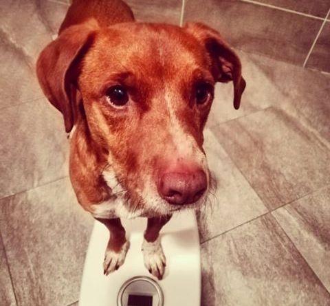 Ma gli dai da mangiare al cane? Si vedono le costole….