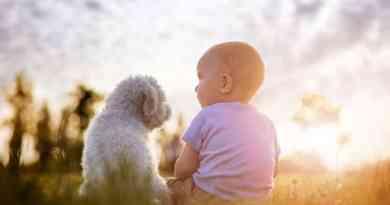 Prepararsi per l'arrivo di un bebè con un cane in casa, introduzione e cuccia!