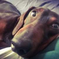 Ragout! Il cane del Maestro Ezio Bosso
