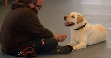 Cani e disabilità, perchè scegliersi. Due storie a confronto