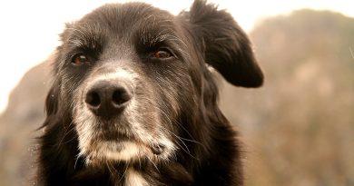 Quando il Cane anziano non ce la fa più, dimostriamo di Essere Umani