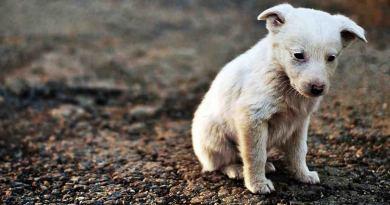 Adottare un cane: non è tutto volontariato quello che luccica.