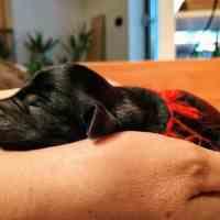 Stimolazione precoce nel cucciolo di cane