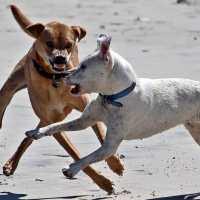 Il cane: dominanza, sottomissione e altri demoni
