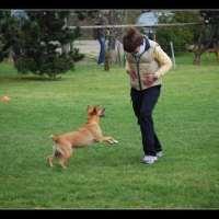 Obedience: come premio il mio cane?