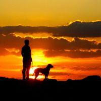 Estate e passeggiate con il cane: i nostri consigli salva vita