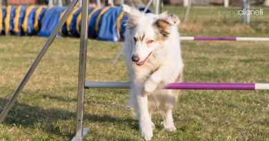 Heidi, il cane cieco che fa agility e si gode la vita