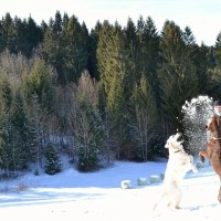 In montagna con il cane e primo soccorso: intervista a Daniele Spanio