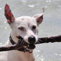 Dog beach: dieci cose da evitare per il vostro cane