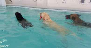 Piscine per cani o piscine cinofile: a cosa servono?