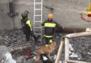 I cani operativi a Genova, premiati per la fedeltà