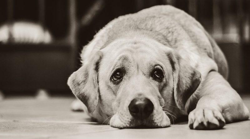Pensioni abusive per cani: evitiamo scelte last minute