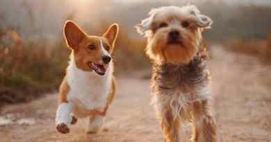 Giornata Mondiale del Cane: 26 agosto