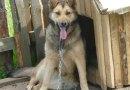 Vieste dichiara guerra al maltrattamento del cane e degli altri animali