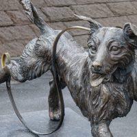 Norvegia un virus contagia decine di cani. Sospeso ogni evento cinofilo