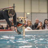 Quattrozampeinfiera Milano: Il week end pensato per il cane